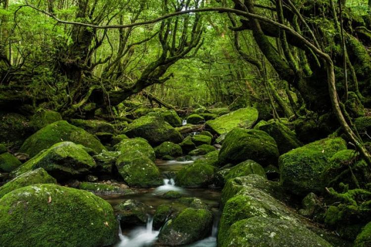 屋久島の画像 p1_31