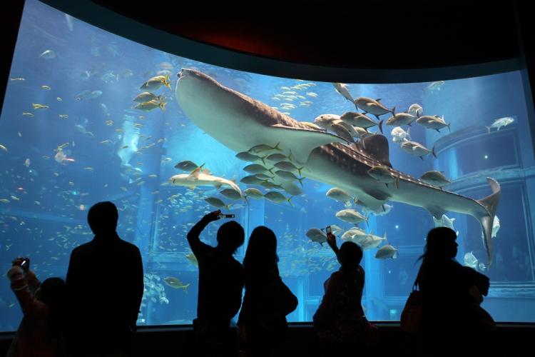 【大阪】世界最大級の水族館!海の世界を体感できる海遊館見所ガイド , おすすめ旅行を探すならトラベルブック(TravelBook)