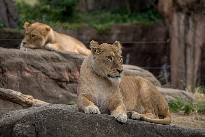 動物たちがイキイキしてる♪「大阪市天王寺動物園」の見どころガイド