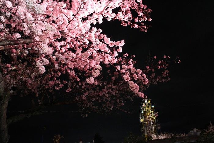 【2019年版】神戸で人気の花見スポット!散歩やピクニックにおすすめの名所5選