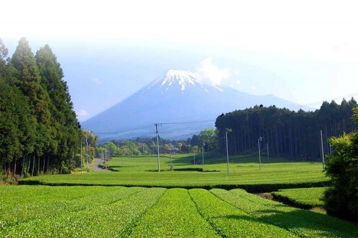 【静岡】お茶摘み&手もみ茶体験できる静岡中部&東部・伊豆のスポット4選