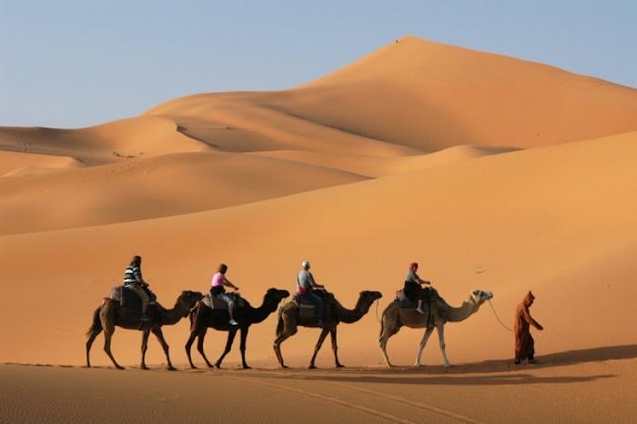 ラクダが歩く砂漠
