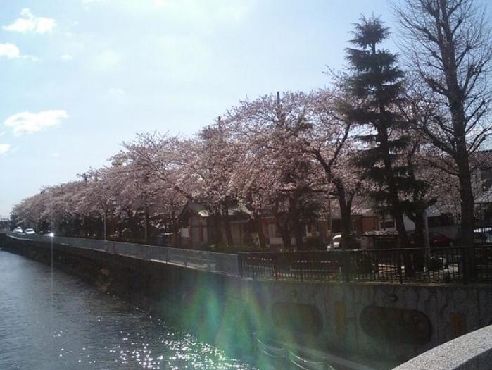 【千葉】市川・船橋で一度は行っておきたい人気の定番観光地5選