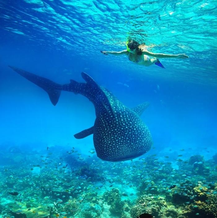 【セブ島】セブに行くならここは訪れたい! 必見の定番観光スポット30選