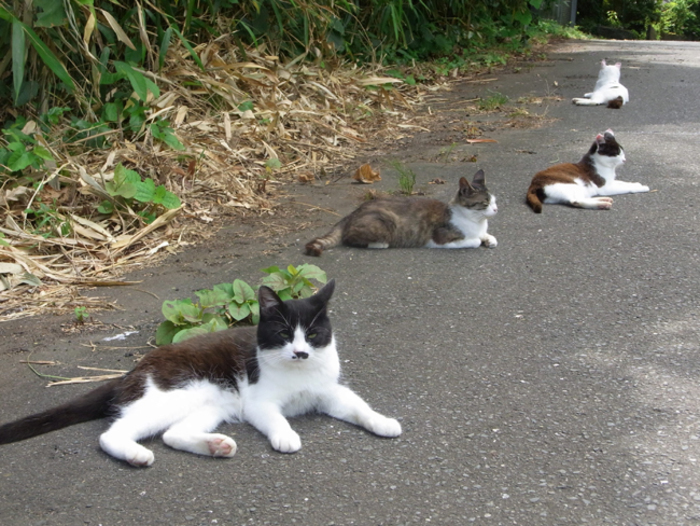 猫好きにはたまらない!一度は見ておくべき猫だらけの島「猫島」6選