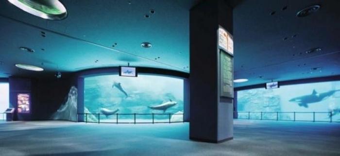 子供・家族みんなで楽しめる名古屋港水族館の見どころ&遊び場徹底ガイド