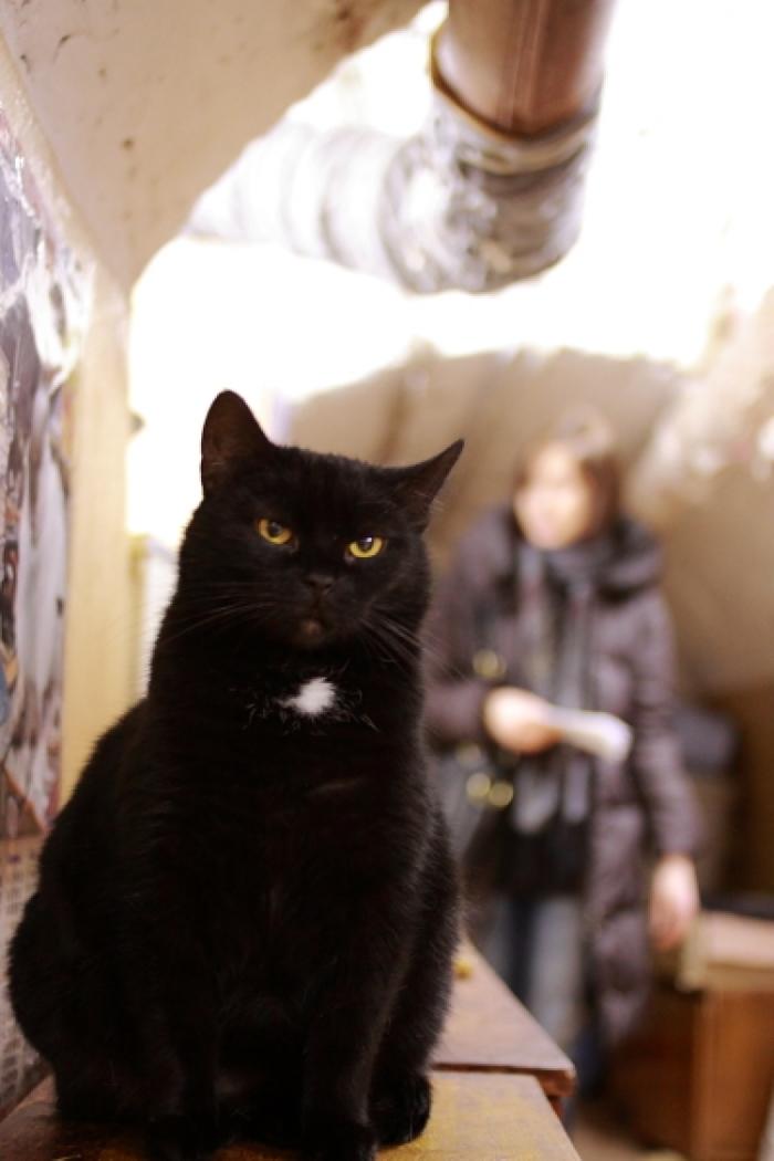 【ロシア】まるで童話の世界! 60匹の猫が住む「エルミタージュ美術館」