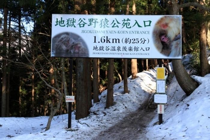 【長野】世界唯一! サルの温泉を撮影できる「地獄谷野猿公苑」がすごい