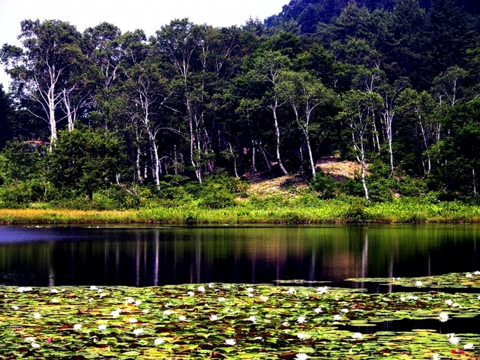 志賀高原は夏も冬も楽しめる! トレッキング&ハイキングのススメ