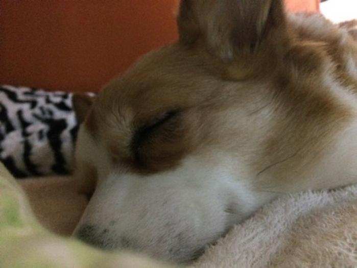 【岐阜】愛犬も愛猫も寂しくない! ペットと一緒に宿泊できるホテル10選