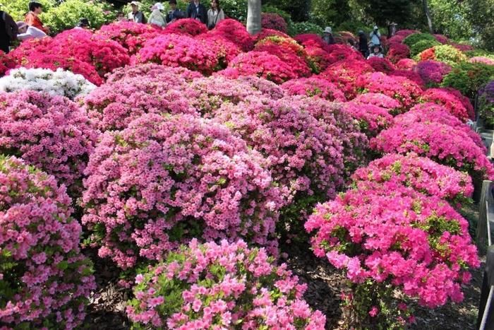 【関東】花の絨毯が歩ける、春・夏のフラワースポット15選