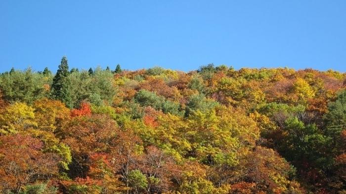 【仙台】ライトアップもあり! 秋のデートで行きたい紅葉スポット5選