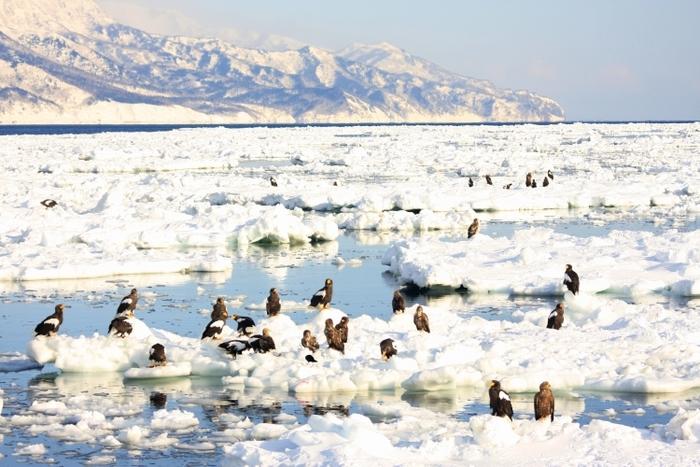【道北】雪景に息を飲む冬の魅力満載のアクティビティ5選