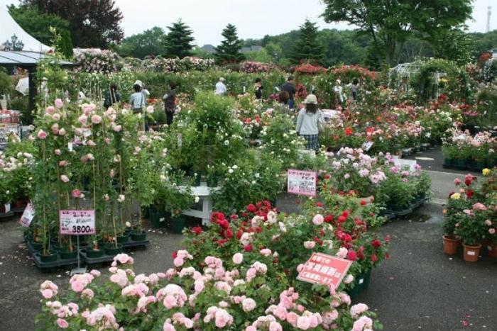 【千葉】「京成バラ園」の咲き誇るバラ庭園の魅力ガイド(割引あり)