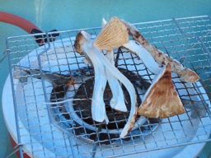 【関西】秋の味覚を自分で手に入れる!松茸狩りツアー5選