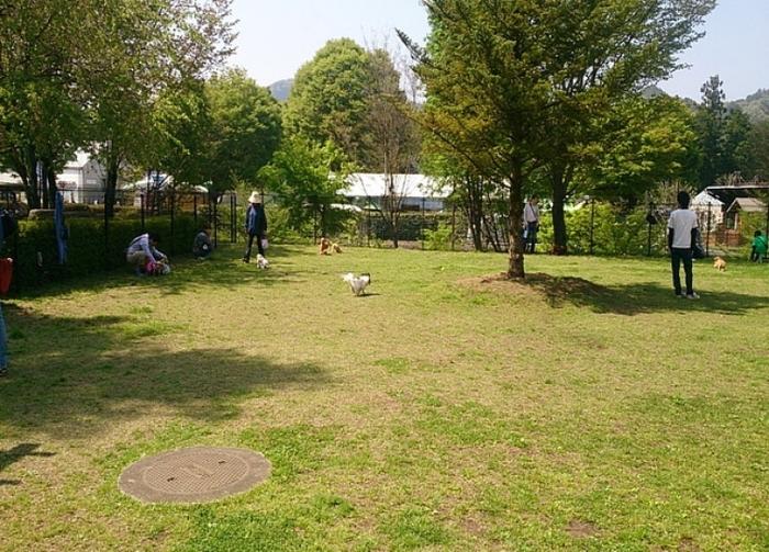 【栃木】道の駅なのに体験施設充実で温泉もある「ろまんちっく村」の魅力(割引あり)