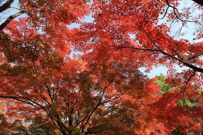 【京都】紅葉を手軽に見られる京都水族館近くの人気スポット4選