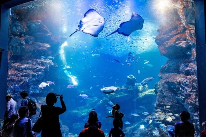 「水族館とは」の画像検索結果
