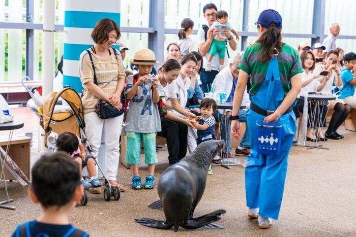 京都観光で忘れちゃいけない京都水族館とは?人気の見どころまとめ