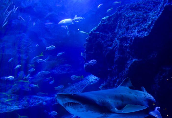 東京スカイツリー観光の新定番。すみだ水族館の魅力とは?