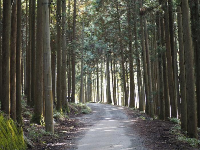 ユーシン渓谷:フォトジェニックな話題の秘境の魅力・行き方徹底ガイド