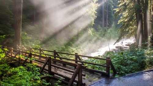 都市森林_【世界遺産】オリンピック国立公園で山、森林、海と変化に ...