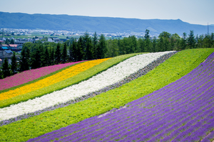 【北海道】自然を身近に!富良野の観光・宿泊におすすめの民宿・ペンション10選