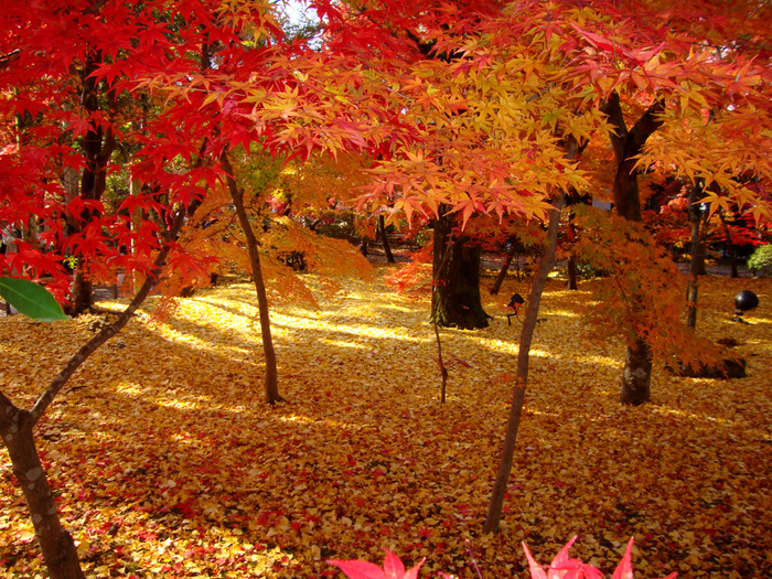 【京都】紅葉の名所おすすめ60選:見頃も合わせてチェック!