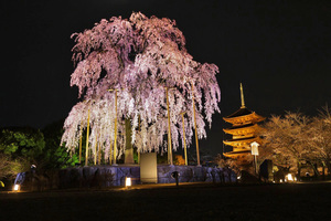 京都でおすすめの夜景スポット20選