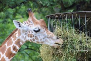 京都の観光でおすすめの動物園&動物ふれあいスポット10選