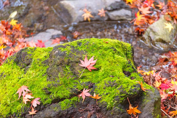 手軽に秋を堪能♪ 関東でおすすめの紅葉スポット5選