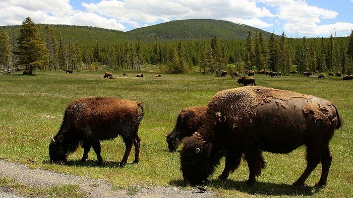 【アメリカ】世界遺産「イエローストーン国立公園」の観光ガイド:絶対に見たい自然の絶景