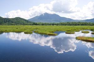 尾瀬観光の魅力:貴重植物の宝庫、特別な世界が広がるハイキングの名所