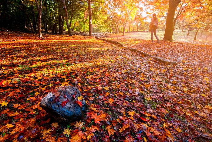 【東京】11月が見頃の秋の花と、花の名所まとめ:紅葉、冬桜、秋の七草ほか