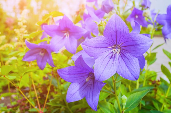 【東京】10月が見頃の秋の花と、花の名所まとめ:コスモス、バラ、ススキほか