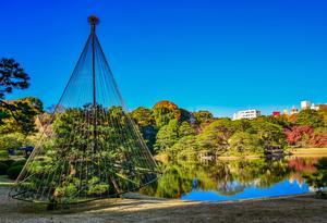 【東京】12月が見頃の冬の花と、花の名所まとめ:紅葉、冬桜、雪吊りほか