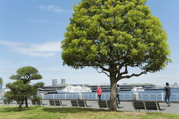 横浜観光でおすすめ観光地完全網羅:神奈川・名所スポットを徹底紹介