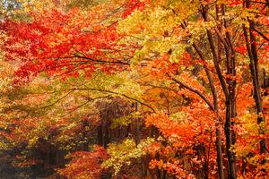 高尾山でおすすめの紅葉の名所 2017
