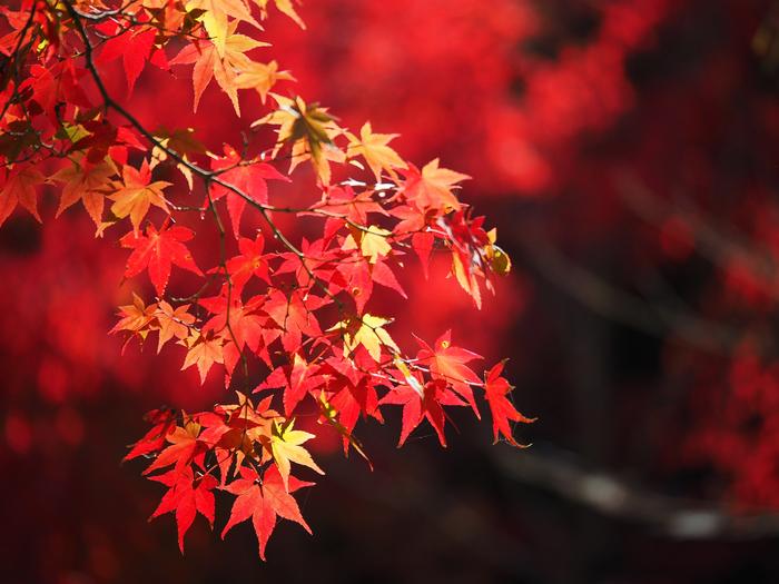 京都でおすすめの紅葉スポット2017:見頃の時期を紹介