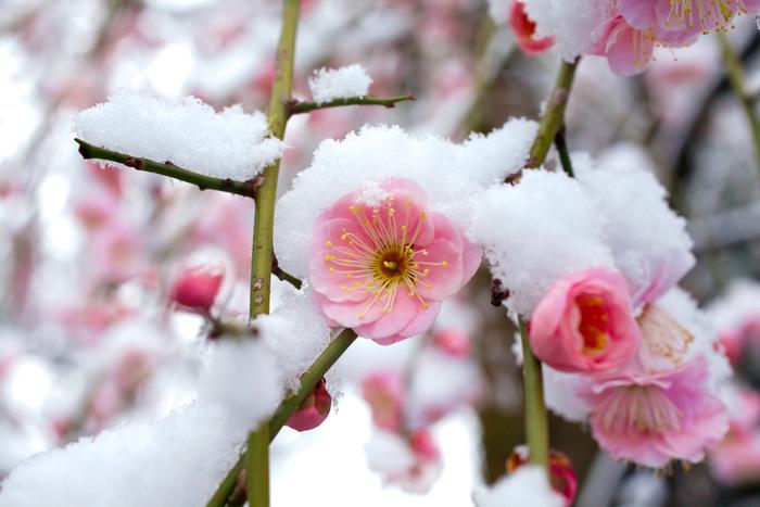 【東京】2月が見頃の冬の花と、花の名所まとめ:ツバキ、ウメほか