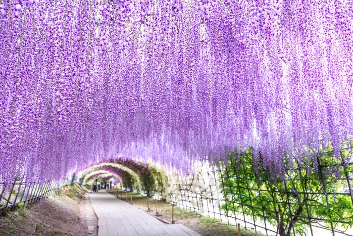 東京5月が見頃の夏の花と花の名所まとめツツジフジ他 おすすめ