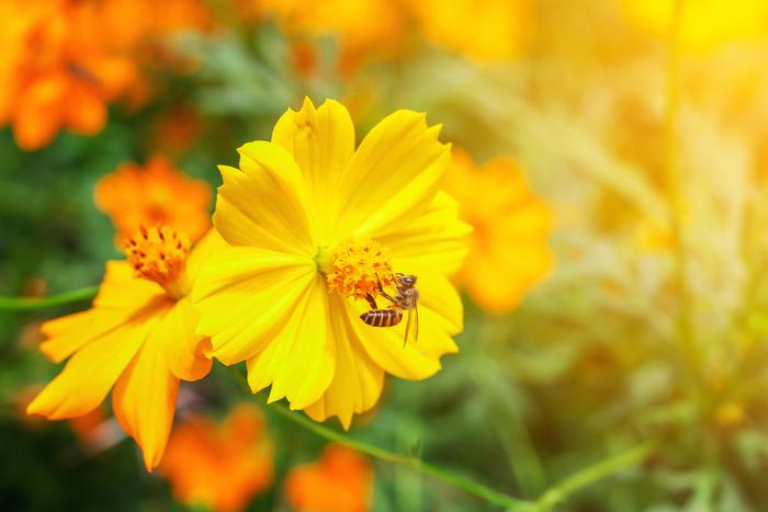 東京7月が見頃の夏の花と花の名所まとめハスキバナコスモス他