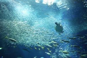アクアワールド茨城県大洗水族館:世界の海で生息する生き物に出会える!