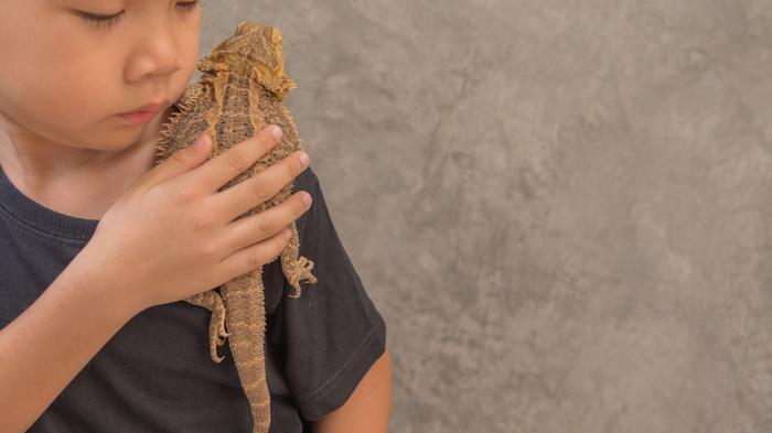 【ペット】トカゲの飼い方:種類・寿命・値段まとめ
