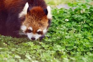 京都市動物園で動物を間近で観察!子供と行きたいお出かけスポット