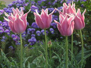 那須フラワーワールド:那須の大地を鮮やかに染め上げる花の楽園