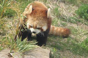 【長野】茶臼山動物園:イベントいっぱいの楽しい動物園