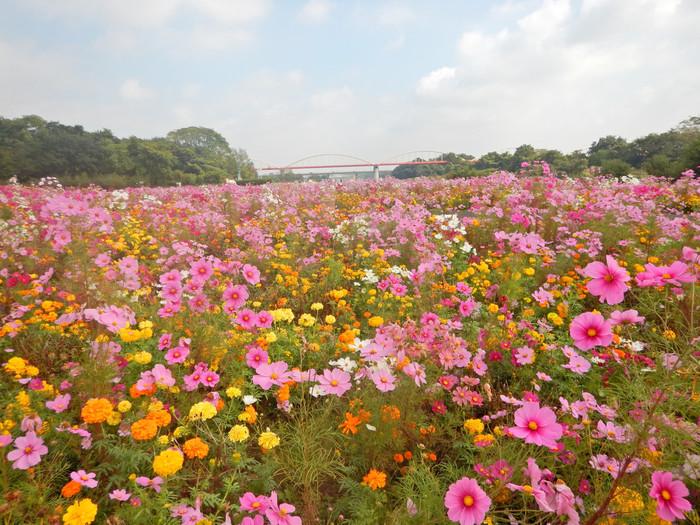埼玉のおすすめ道の駅:ランキング上位の施設一覧