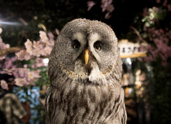 【東京】流行りはフクロウ! 都内でおすすめのフクロウカフェ17選