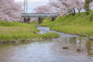 【島根】玉造温泉で宿泊したいおすすめ旅館10施設